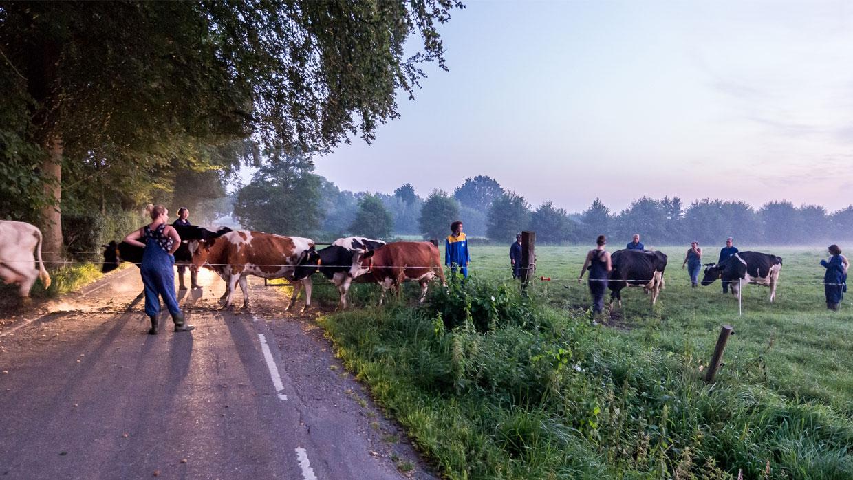 Deelnemers halen koeien
